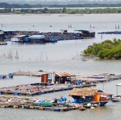 Bà Rịa - Vũng Tàu: Tiềm ẩn nguy cơ ô nhiễm từ việc nuôi thủy sản lồng bè