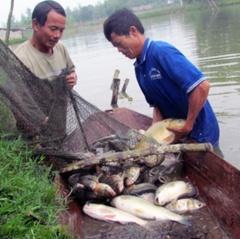 Hiệu quả nhờ chuyển đổi sinh kế của ngư dân ven biển tại Nghệ An