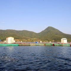 Vĩnh Thạnh phát triển nghề nuôi cá nước ngọt