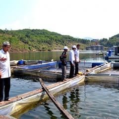 Bất cập hỗ trợ nuôi cá trong lồng bè Quảng Nam