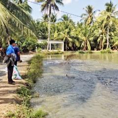 Mô hình nuôi cá lóc bể bạt theo chuỗi khép kín ở Vĩnh Long