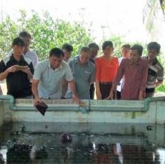Đức Hòa: Hiệu quả từ mô hình nuôi lươn mật độ cao