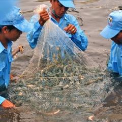 Tăng trưởng kinh tế 2019: Đột phá từ con tôm