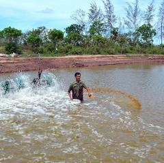 Quản lý môi trường trong nuôi tôm siêu thâm canh