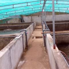 Hiệu quả bước đầu của mô hình nuôi tôm trong bể xi măng