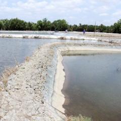 Cần Đước nuôi tôm công nghệ biofloc không hiệu quả