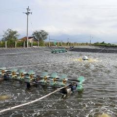 4 mô hình nuôi tôm nước lợ phổ biến đạt hiệu quả cao