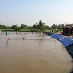 Cần Giuộc: Nắng nóng, 160ha tôm bị nhiễm bệnh