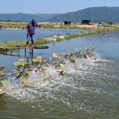 Để nuôi trồng thủy sản thành công