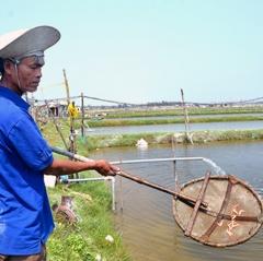 Rủi ro nuôi tôm nước lợ