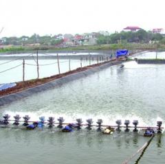 Hậu Lộc: Chuyển đổi đất lúa và ruộng muối kém hiệu quả sang thủy sản