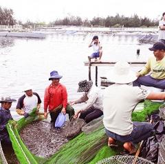Hiệu quả từ nuôi tôm trên cát ở Triệu Phong