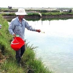 Thừa Thiên Huế: Nuôi xen ghép tôm - cua - cá đạt hiệu quả cao