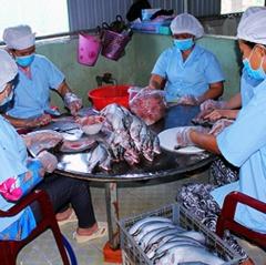Đưa sản phẩm cá thát lát vươn xa