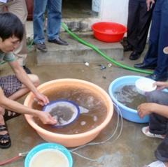 Nông dân Quỳnh Lưu lo lắng thiếu tôm giống đầu vụ