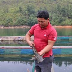 Với vôi bột, lá xoan mà 7 năm nuôi cá năm nào cũng trúng