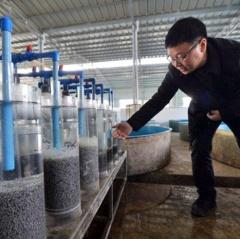Trứng cá tầm rớt giá vì sản lượng dồi dào từ Trung Quốc