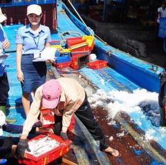 Truy xuất nguồn gốc thủy sản: Nghiêm túc, hiệu quả và có trách nhiệm