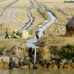 ĐBSCL: Nước sông đang xuống thấp, mặn đổ bộ!