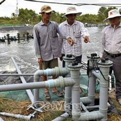 Xử lý nước nuôi tôm bằng tia cực tím ở Cà Mau