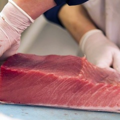 Xuất khẩu cá ngừ sang Mỹ tăng trở lại