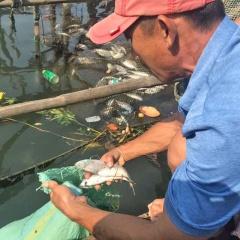 Thừa Thiên Huế: Tìm nguyên nhân cá chết ở Thuận An