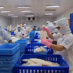 Giá tốt - xuất khẩu cá tra Việt Nam sang Anh tăng