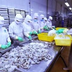 Xuất khẩu tôm Việt Nam tiếp tục giảm trong quý đầu năm nay