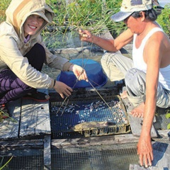 Làm giàu từ nuôi cá chình lồng bè