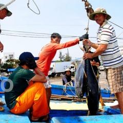 Bình Định: Rộn ràng mùa biển vui