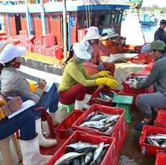Đánh bắt vụ cá nam: Ngư dân gặp khó