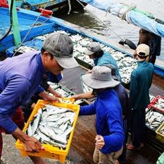 Ghi nhật ký khai thác thủy sản: Có nhưng… đối phó