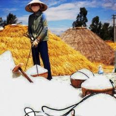 Diêm dân Bình Định với niềm vui được mùa