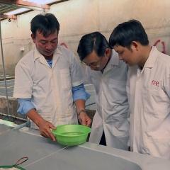 Sóc Trăng: Kiểm soát chất lượng tôm giống tại các cơ sở ương dưỡng