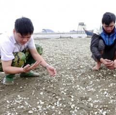 Lấy mẫu phân tích nguyên nhân ngao chết ở xã Hải Lộc