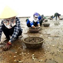 Khắc phục tình trạng ngao chết tại Kim Sơn