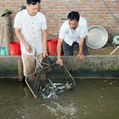 Nhóm liên kết nuôi trồng thủy sản giúp ổn định đầu ra giá cả