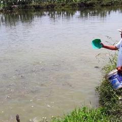 Cựu binh Quảng Nam nuôi cá làm giàu