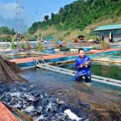 Hướng dẫn nuôi cá lồng bè trên hồ chứa
