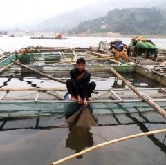 Người Mông, Dao làm giàu từ nuôi cá trên hồ Cốc Ly