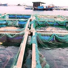 Quãng Ngãi: Phập phồng vụ thủy sản mới