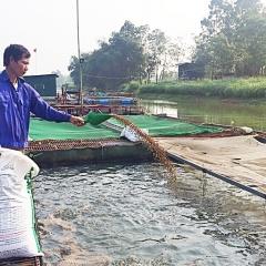 Thành công với nghề nuôi cá lồng nhờ phòng bệnh cho cá bằng tỏi