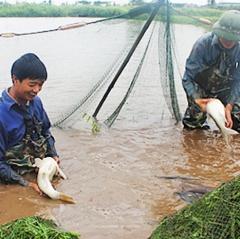Nâng cao hiệu quả các vùng nuôi thủy sản nước ngọt