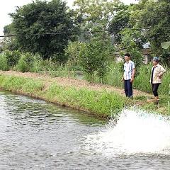 Ý Yên (Nam Định) phát triển các vùng nuôi thủy sản