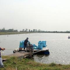 An Giang: Tín hiệu vui giá cá tra tăng trở lại