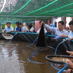 Một số lưu ý trong nuôi thủy sản để đảm bảo an toàn thực phẩm
