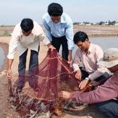 Phát huy tiềm năng nuôi trồng thủy sản Bến Tre