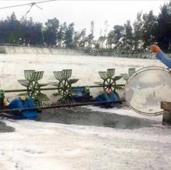 Thừa Thiên Huế: Nắng nóng, xuất hiện tình trạng tôm cá nuôi bị chết