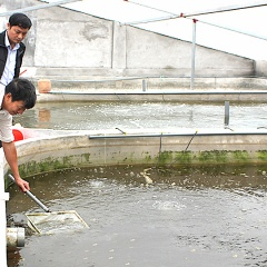 Thị trấn Rạng Đông phát triển kinh tế nhờ nuôi thủy sản