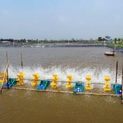 Kim Sơn - Ninh Bình: Đã thả nuôi 2.115 ha tôm